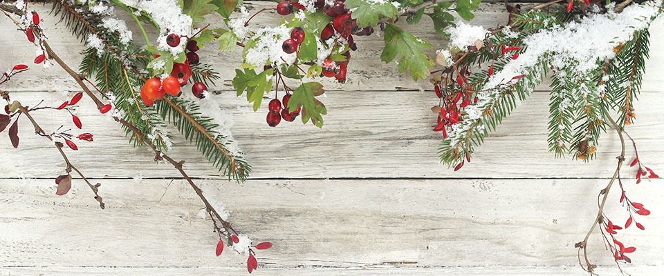 winter-background-cranberry-web-slider